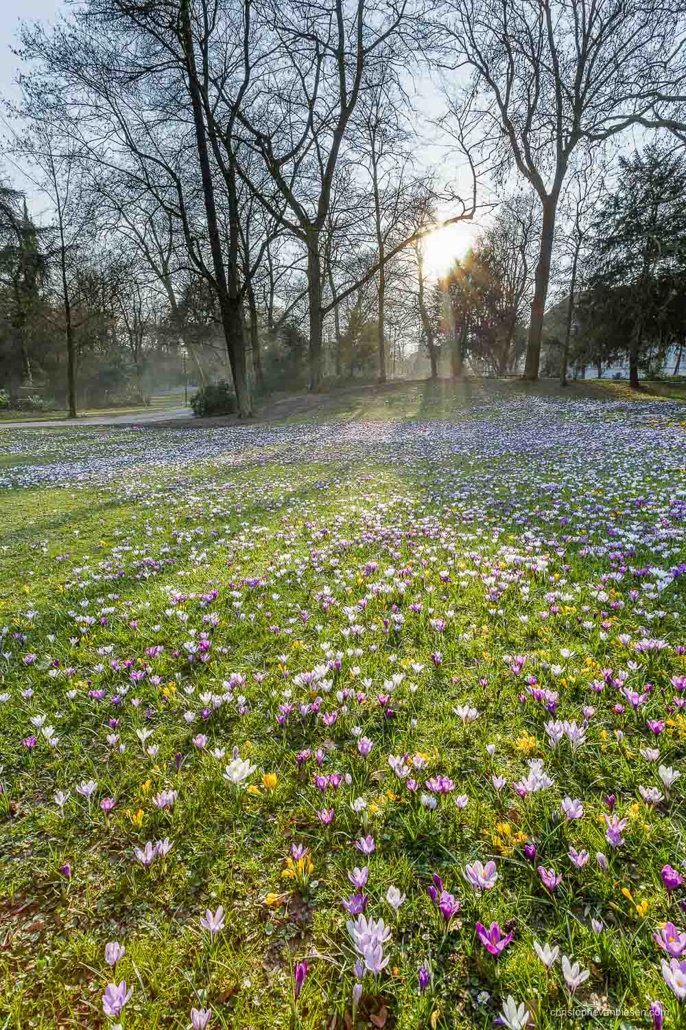 Spring in Luxembourg - The Edmund Klein municipal park in Luxembourg City during spring when crocus flowers pop up everywhere around the place - Nature Awakens