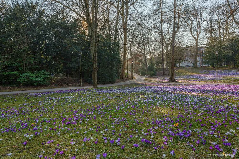 Spring in Luxembourg - The Edmund Klein municipal park in Luxembourg City during spring when crocus flowers pop up everywhere around the place - Revival