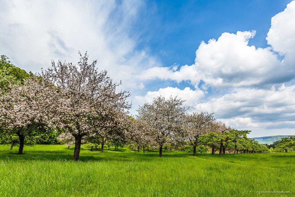 Spring in Luxembourg - Spring in Luxembourg's countryside - Apple Garden