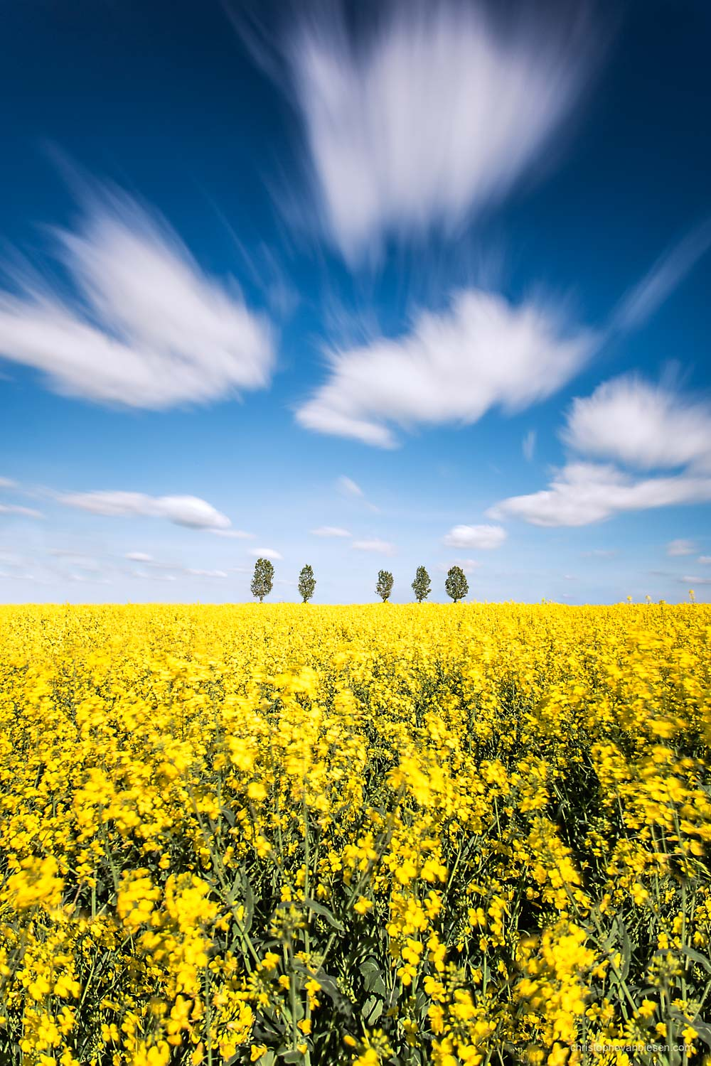Spring in Luxembourg - Rapeseed fields in Spring in Luxembourg - Demeter's Gift
