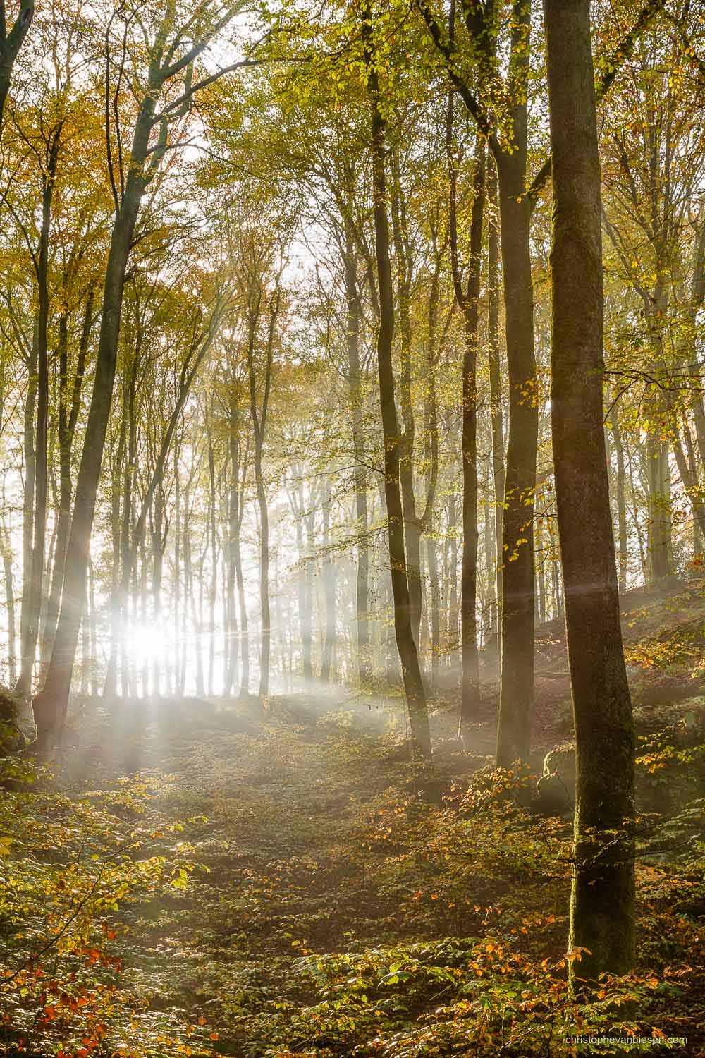 Autumn in Luxembourg - Autumn in Luxembourg's forests in the Mullerthal region - Glimpse of Light