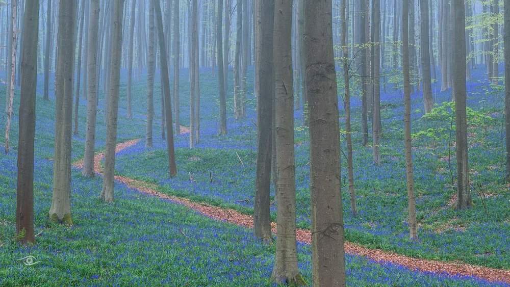 Photography Workshop - Hallerbos - Belgium - The bluebell forest of Halle, known as the Hallerbos, near Brussels, Belgium