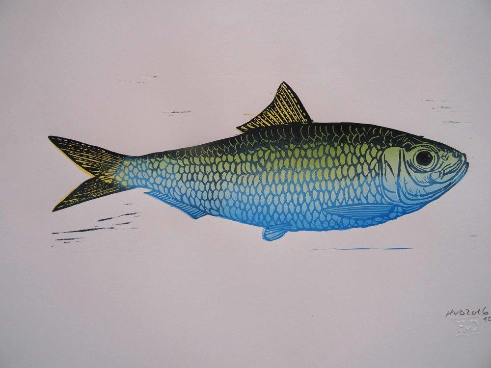 228 - scaled sardine, 2-plate lino 15x30 cm, 50 €