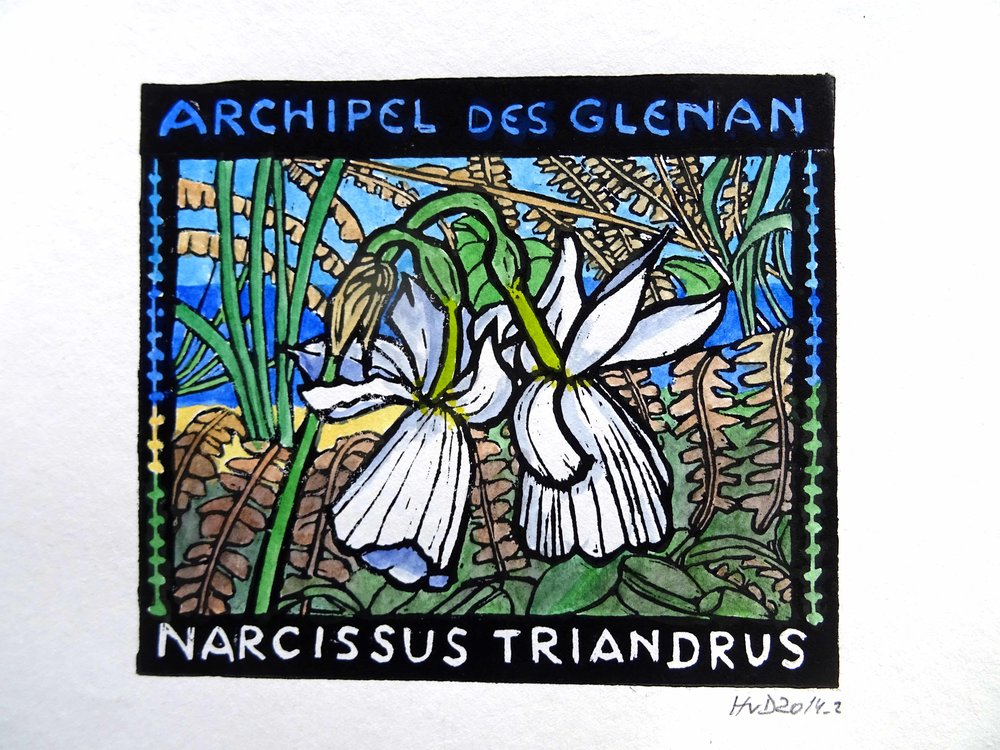 140 - Narcissus, coloured lino 13x15 cm, 60 €