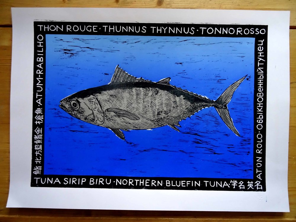 62 - Thon rouge, 3-plate lino 42x60 cm, 100 €, sales go to Greepeace, ocean conservation