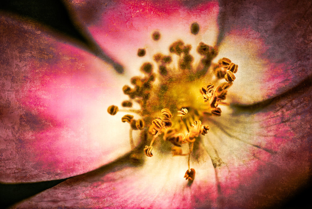 Macro-Flower-DT-Edit.jpg