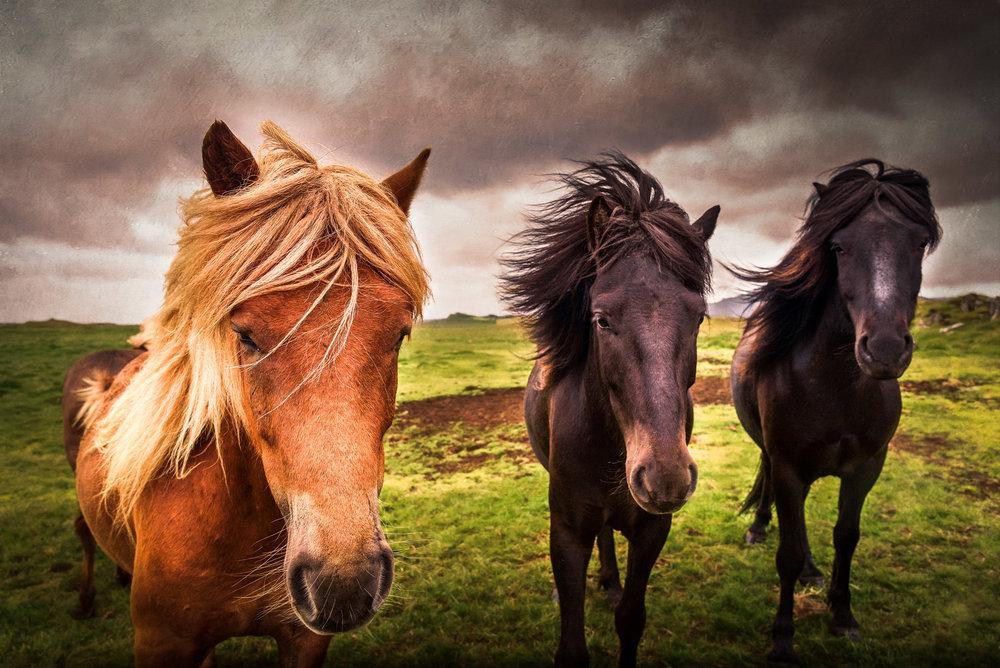 Storm_Horses2018.jpg