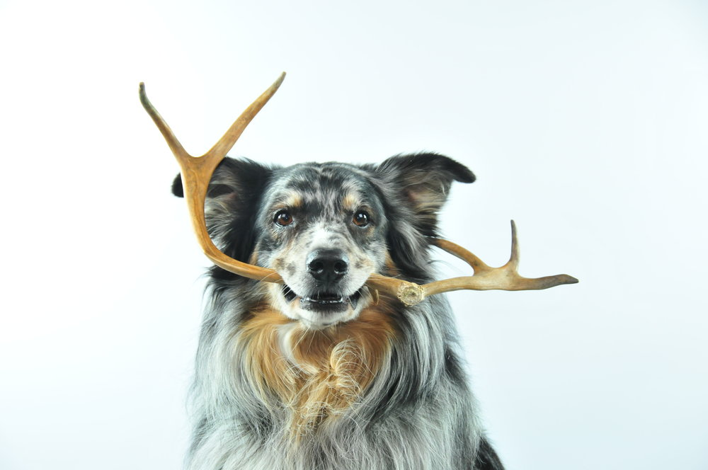 happy_antler
