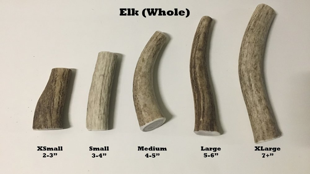 Elk whole sizes.jpg