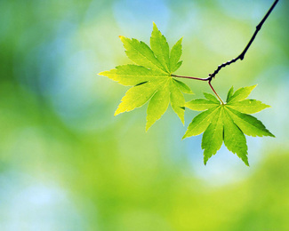 Earth teach me to forget myself as melted snow forgets its life. Earth teach me resignation as the leaves which die in the fall. Earth teach me courage as the tree which stands all alone. Earth teach me regeneration as the seed which rises in the spring. - William Alexander