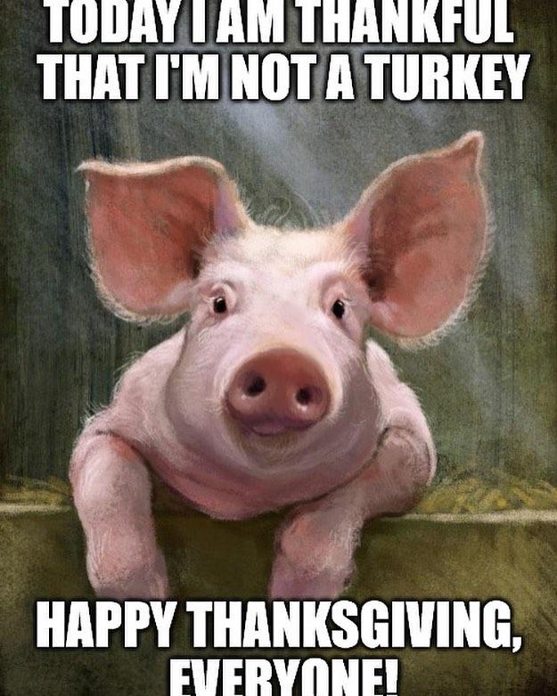 It's turkey day! #cchfarm