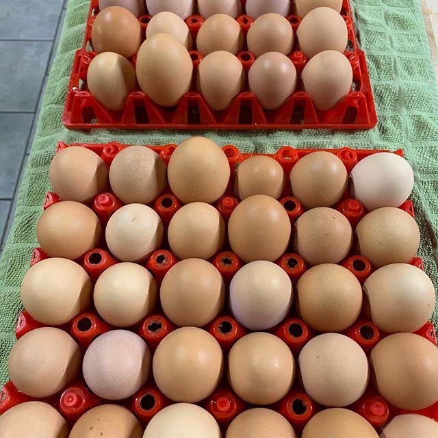 Super Bowl? Pffft...ain't nobody got time for that! #cchfarm #farmlife #eggs #freerange