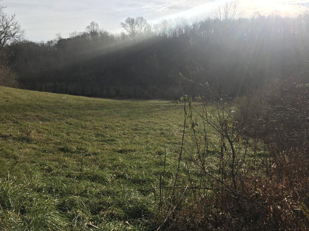 Field 12.12.16.JPG