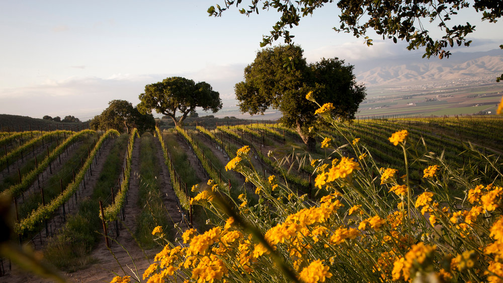 10 California Pinot Noirs at 90+ Pts.