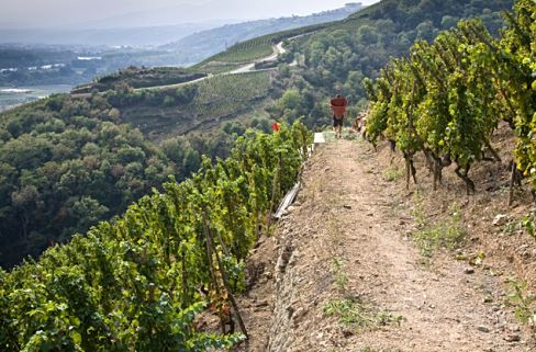 The Terroir Does the Talking in E. Guigal's Stellar Rhône Valley Wines