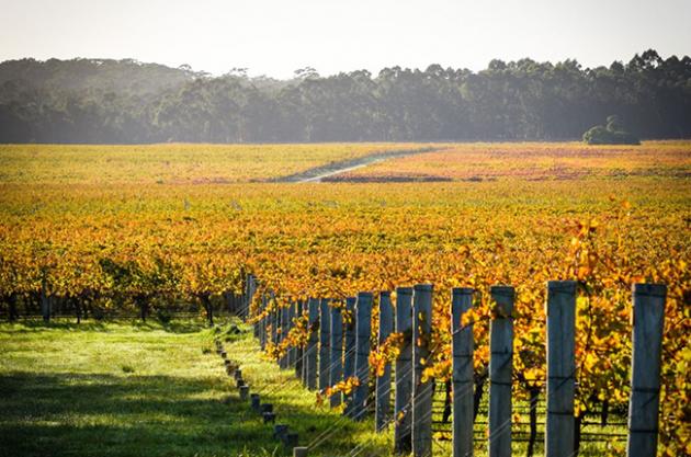 Vasse Felix buys Watershed Vineyard