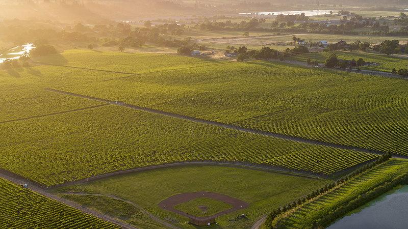11 Succulent Sauvignon Blancs from California