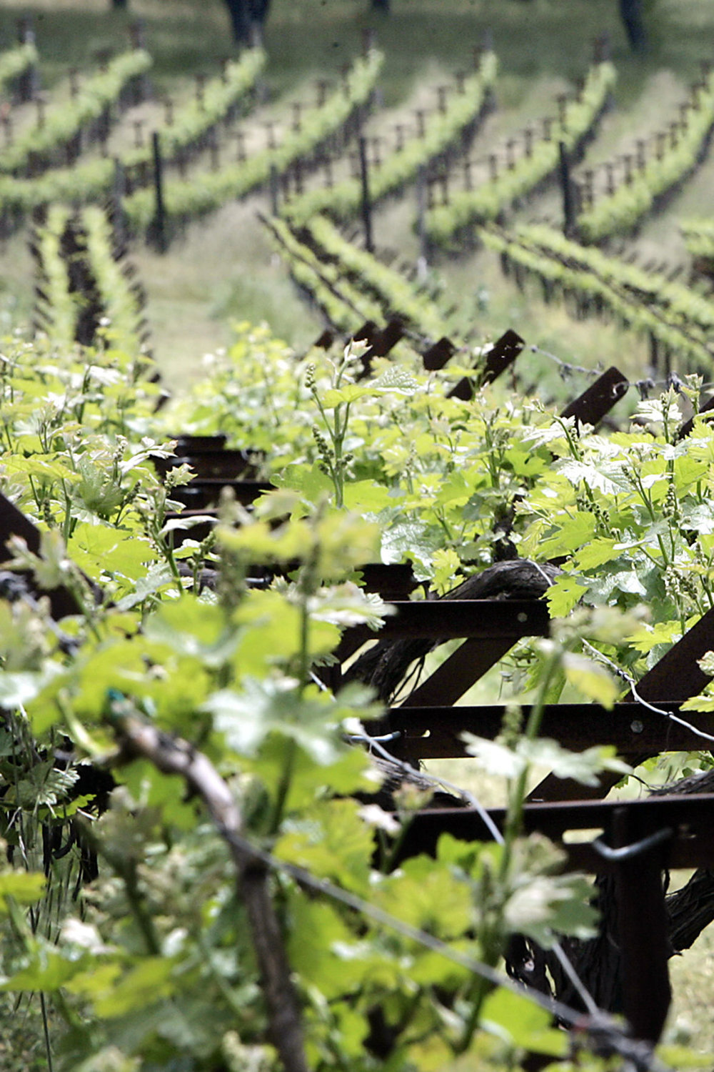 ZD Wines wins Napa County approval to make more wine