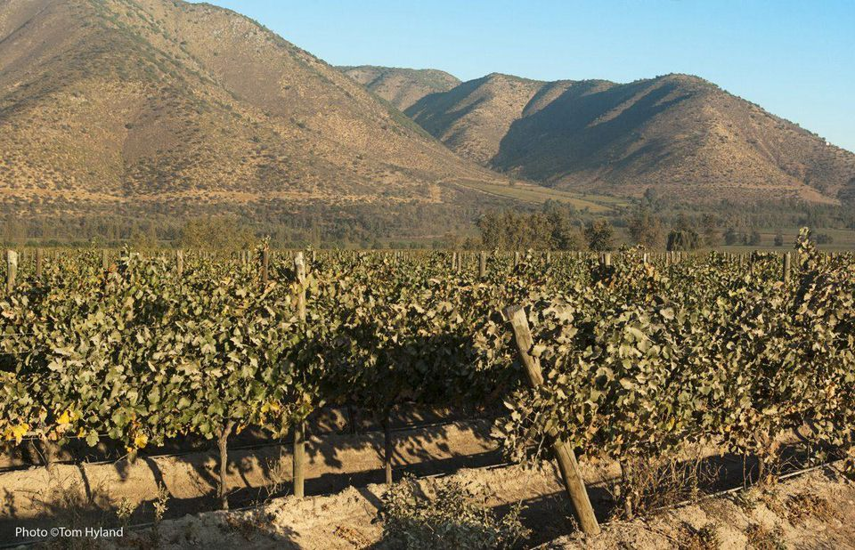 Wines of Chile - A Whole New World of Style and Excellence