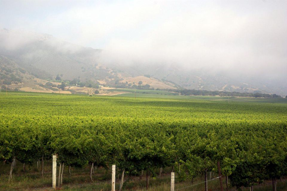 California Chardonnays - A Regional Tour With Morgan and Miner