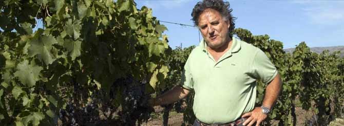 The Prestige of Pre-Phylloxera Vines