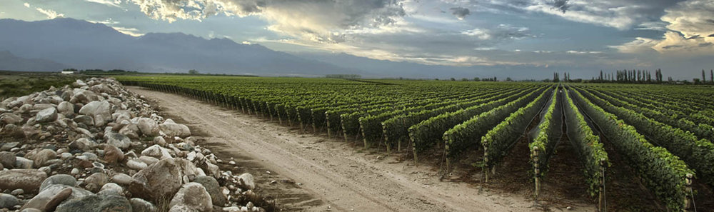 How Argentina's Uco Valley is Creating First-Class Wine Experiences
