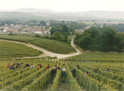 BOLLINGER CELLAR MASTER: CHAMPAGNE 2018 'BEST' OF MY LIFE