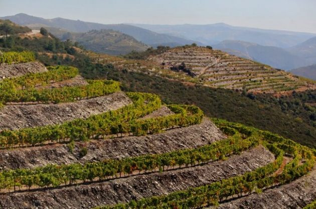 Busting terroir myths: The science of soil and wine taste