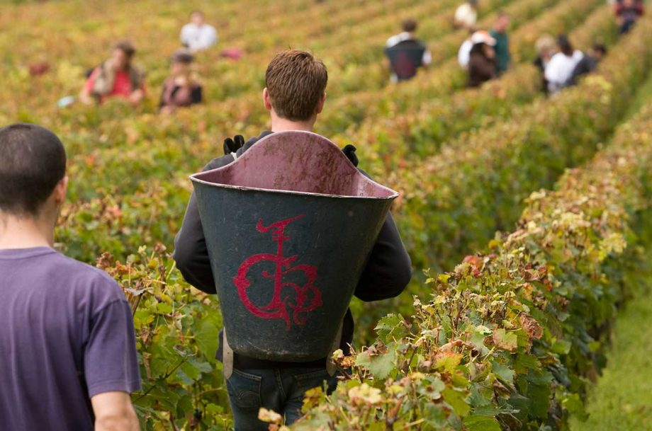 How Pessac-Léognan 2016 wines taste in the bottle