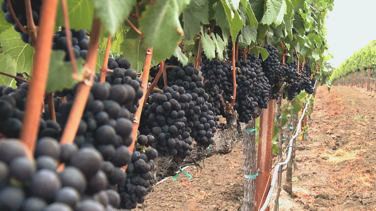 California's newest grape-growing region is now on wine labels
