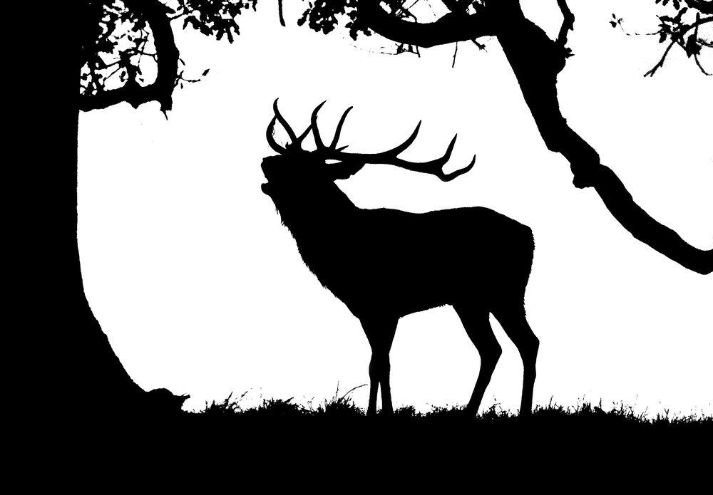 red_deer1.jpg