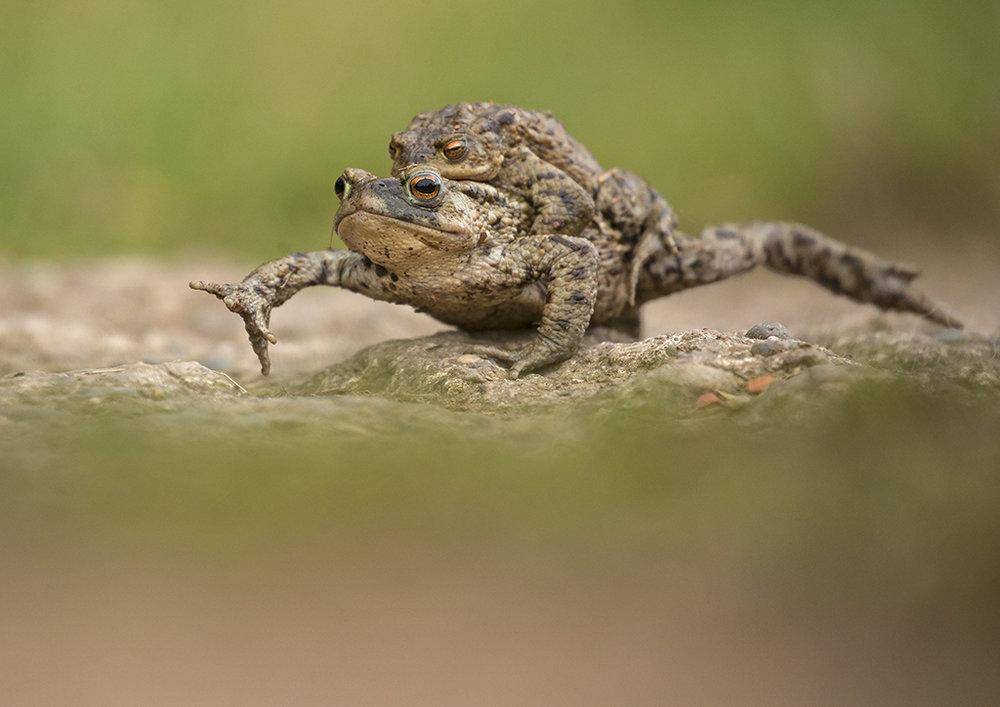 toads5.jpg