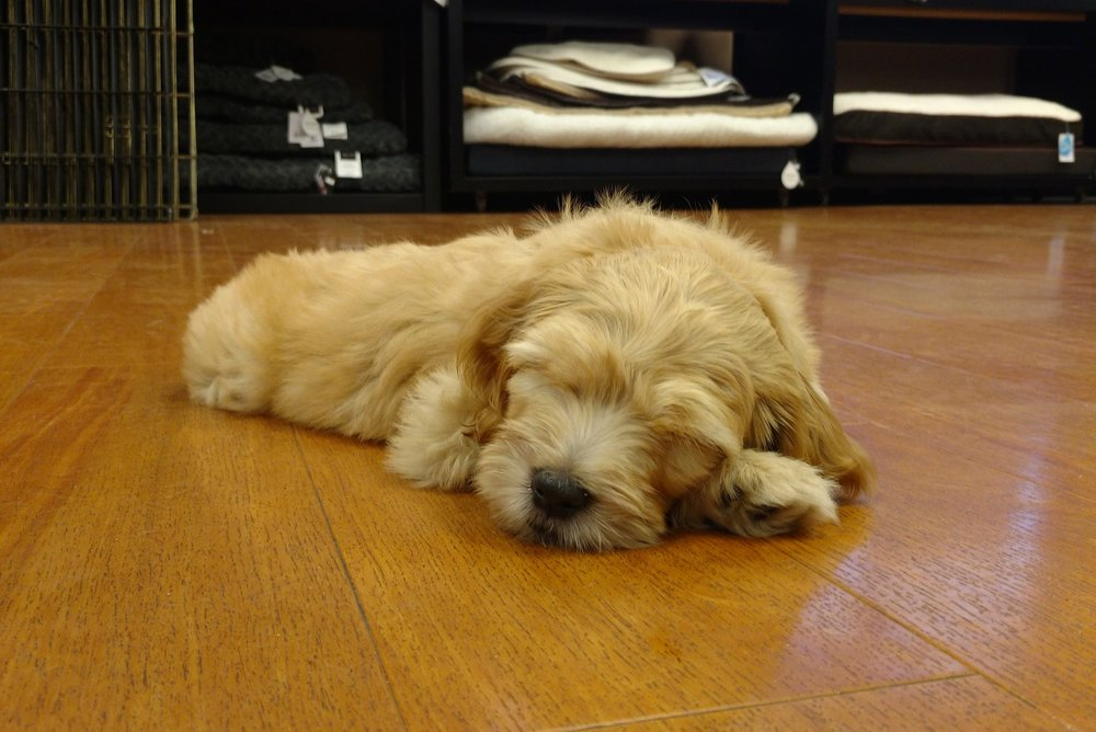 Puppy Foundations - Learn the basics for your puppy