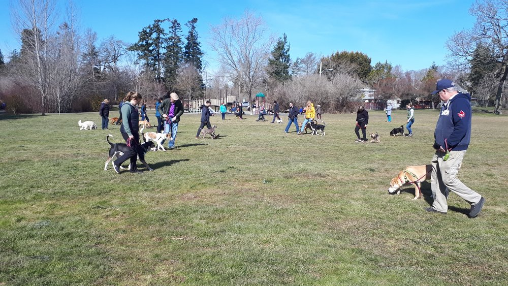 All Ages Group Socialization & Training Walks - owner participated ~ Led by trainer Aviva Shtullsocialization & TRAINING OPPORTUNITY for DOGS OF all ages
