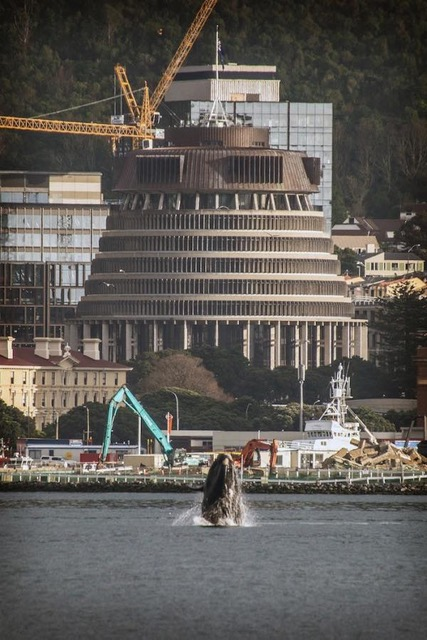 whale outside parliament buildings.jpeg