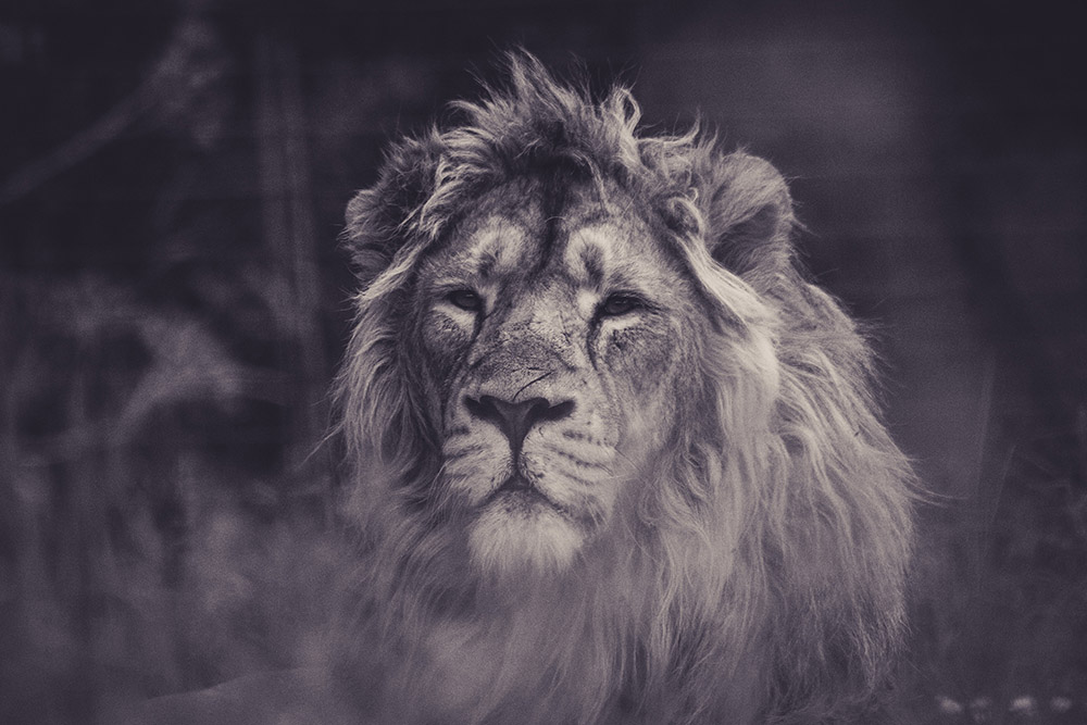 the-edit-lion-2.jpg