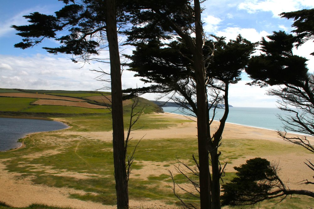 loe bar trees IMG_3134.jpg