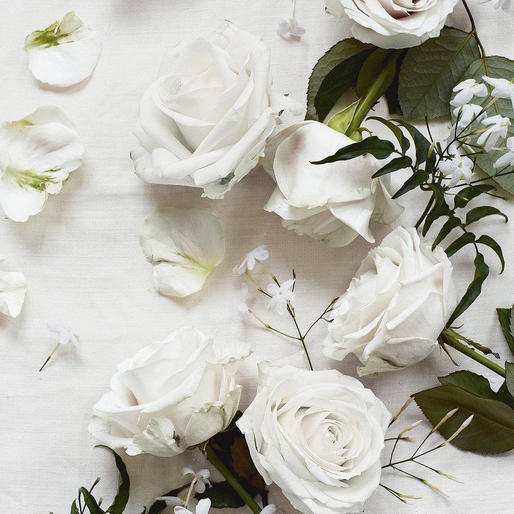 The White Company - Shampoo, Conditioner, Bath & Shower Gel FlowersScented Jasmine, Rose & Neroli      (image courtesy The White Company)