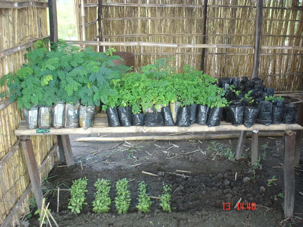 Indigenous tree seedlings to be used in our Agroforestry demonstration fields.