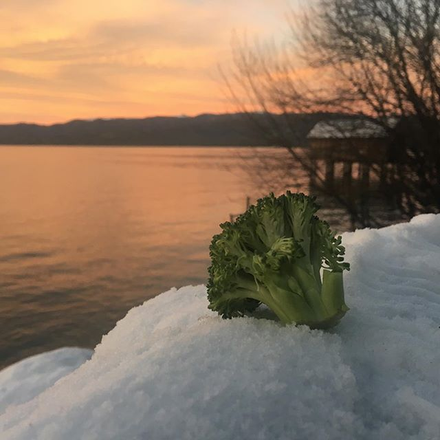 Happy New Year folks! Here's to another happy, healthy, strong and productive year. #broccoliishellahealthy