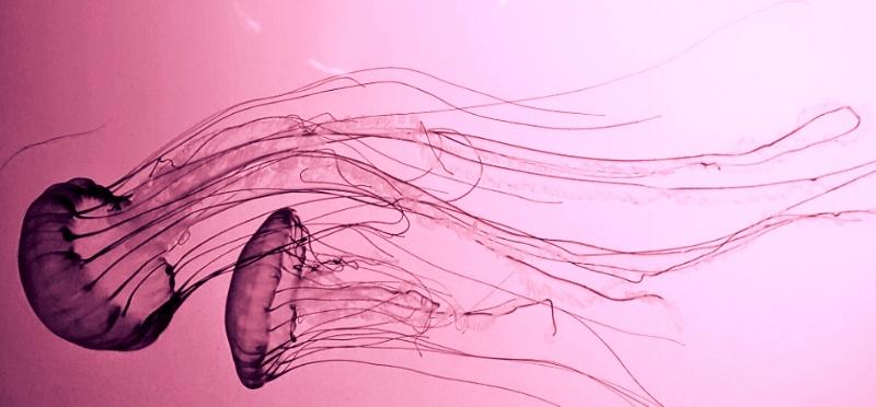 Jellyfish Love.jpg