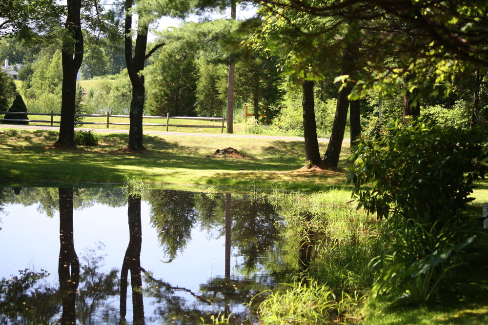 Guest house grounds 1.jpg