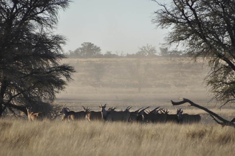 Hunt Namibia Kalahari OutPost89.jpg