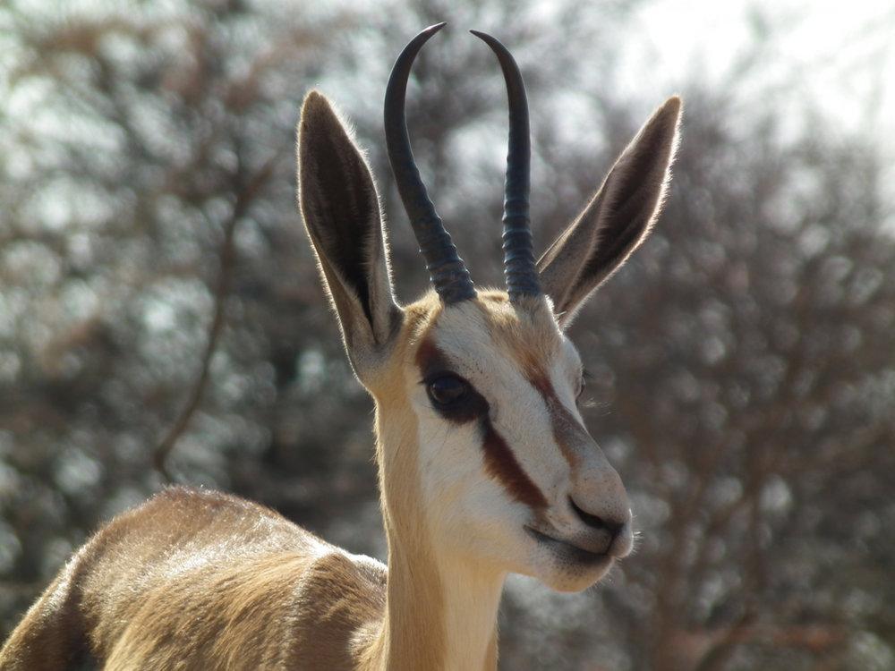 Hunt Namibia Kalahari OutPost99.JPG
