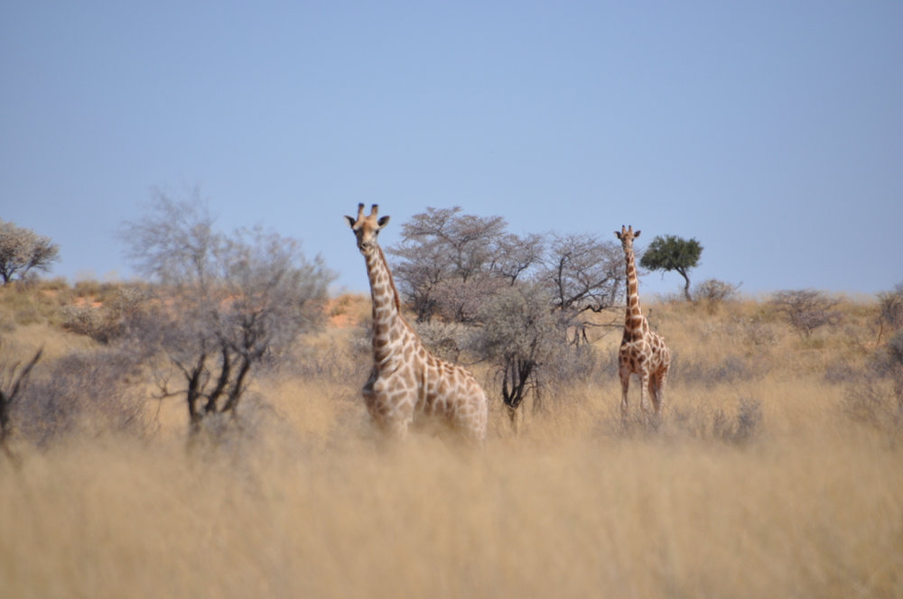 Hunt Namibia Kalahari OutPost102.JPG