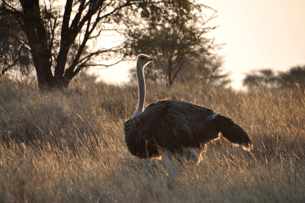 Hunt Namibia Kalahari OutPost107.JPG