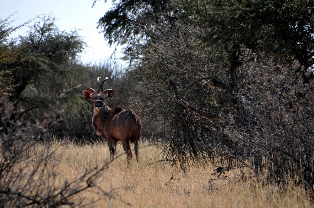 Hunt Namibia Kalahari OutPost108.JPG