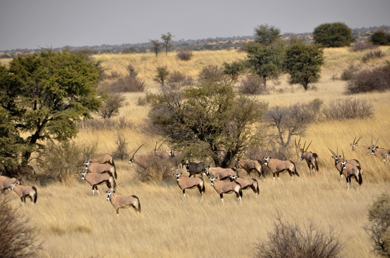 Hunt Namibia Kalahari 2OutPost80.jpg