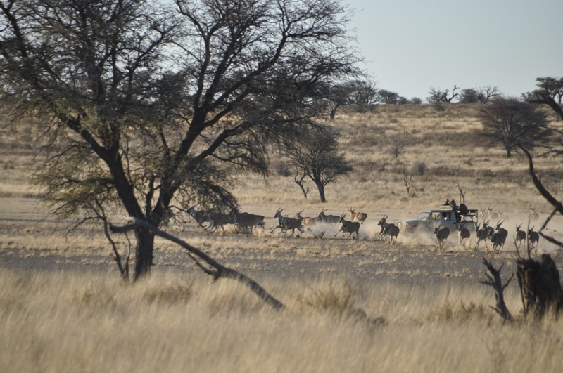 Hunt Namibia Kalahari 2OutPost91.jpg