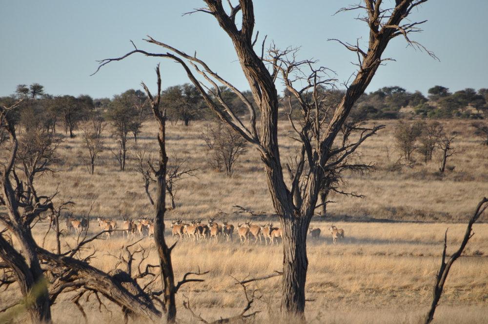 Hunt Namibia Kalahari 2OutPost103.JPG